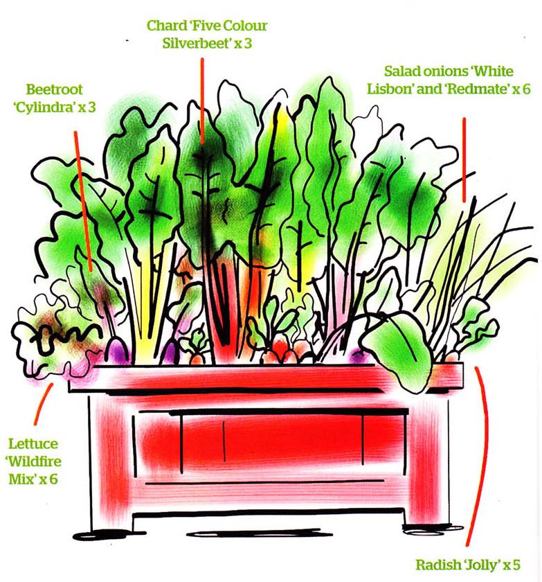 Back Door Vegetables