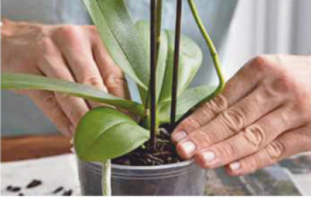 pack orchid compost