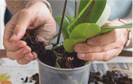 reuse old pot