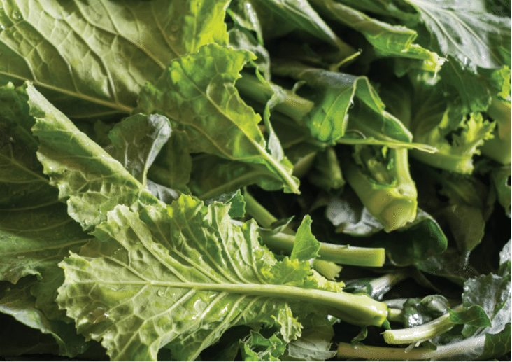 What Are The Fastest Growing Vegetables