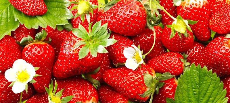 Quinault Strawberries